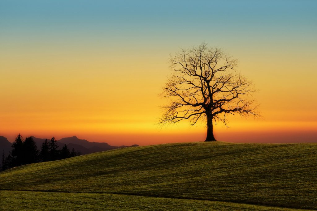 Baum auf Wiese mit Sonnenuntergang