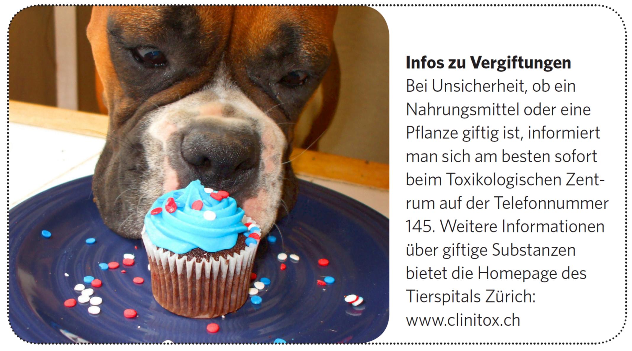 informationen über hunde