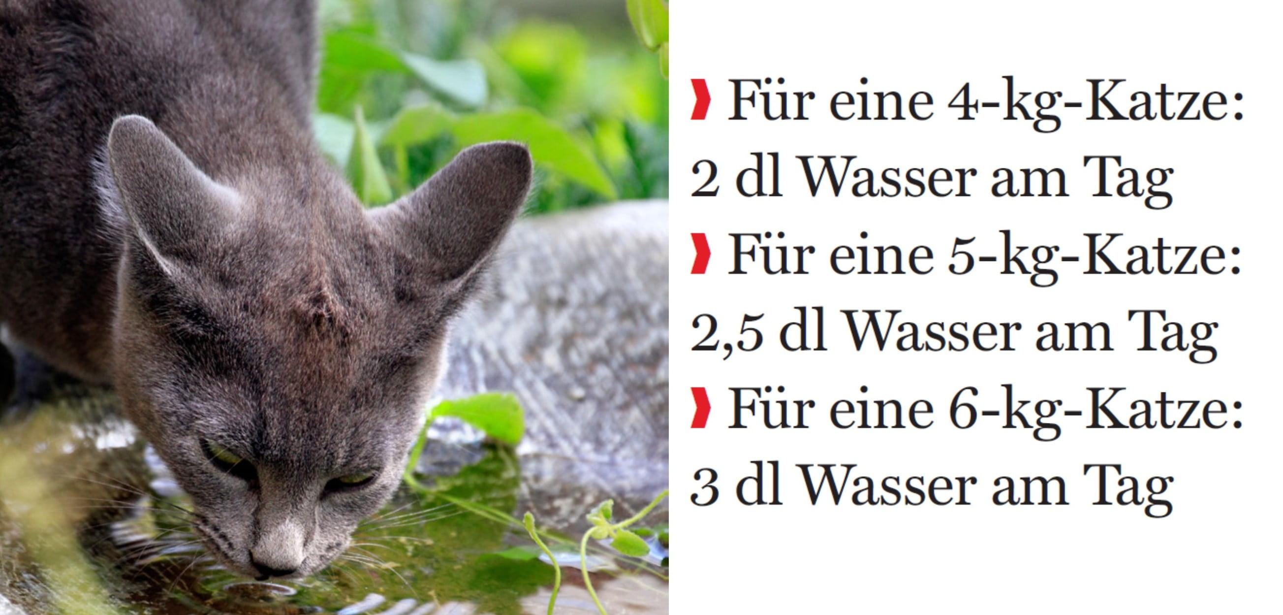 Plötzlich Trinkt Die Katze Viel Tierarztpraxis Küsnacht