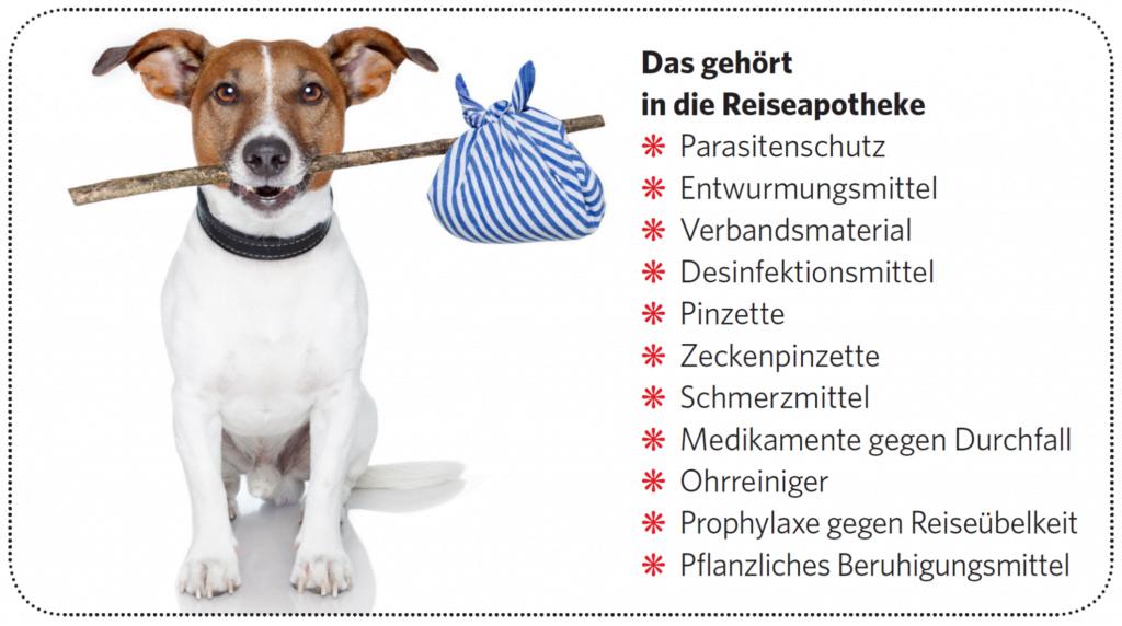 Wenn Hunde reisen