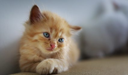 Katzen Welpen