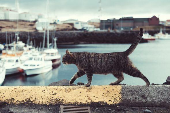 Katzen chippen ist nicht für die Katz